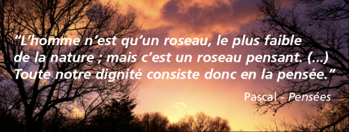 citation,citations,roseau pensant,