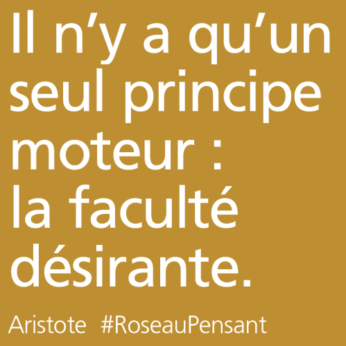 citation,aristote,roseau pensant