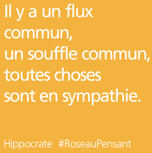 citation,hippocrate,roseau pensant